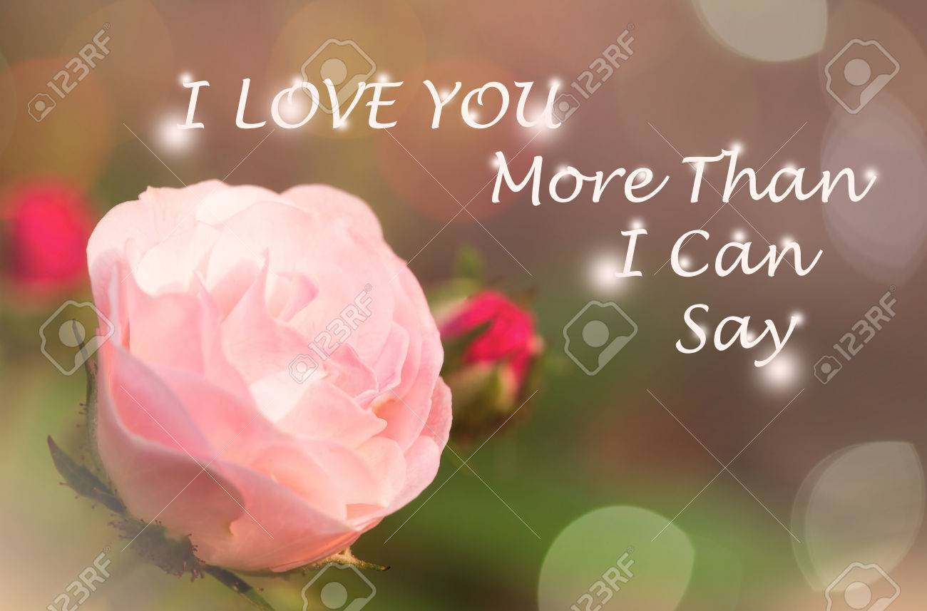 Quote. I Love You More Than I Can Say. Sweet Dreamy , Pink Rose