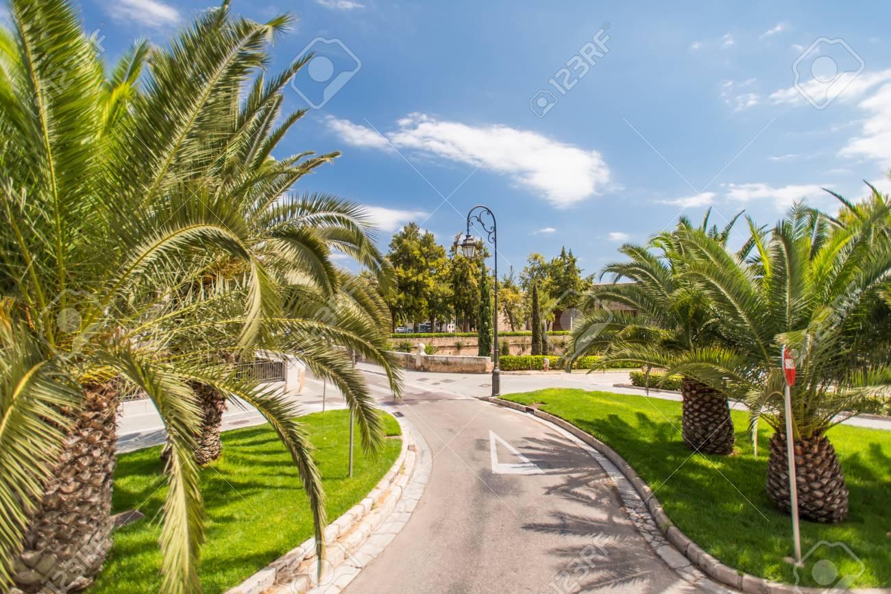Road in tropical garden Stock Photo - 15120613