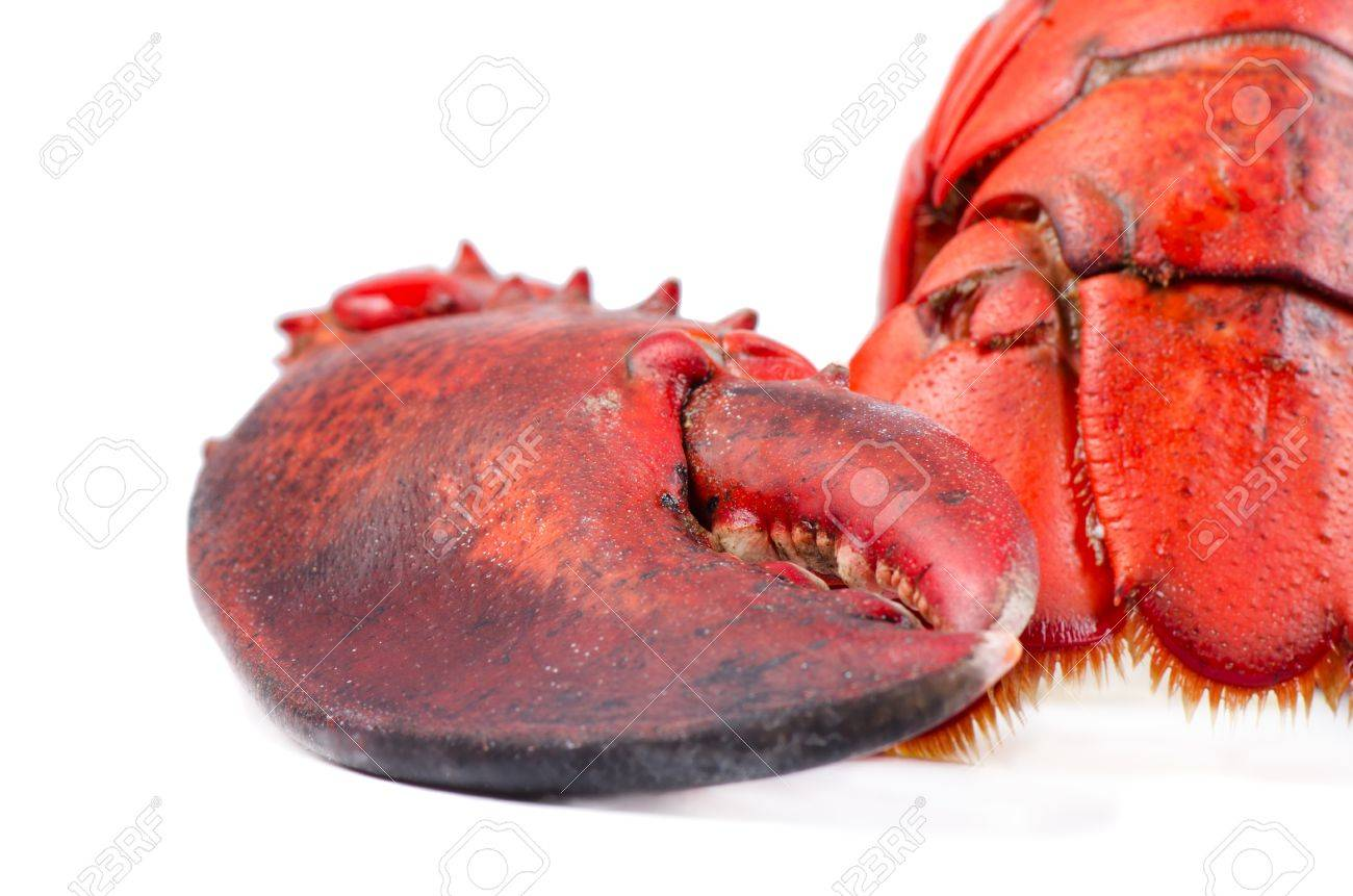 Claw and tail of lobster on white background isolated Stock Photo - 17004531
