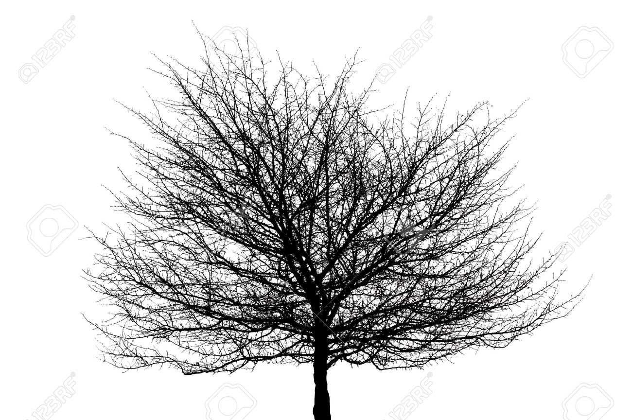 black tree silhouette on white in isolation Stock Photo - 867910