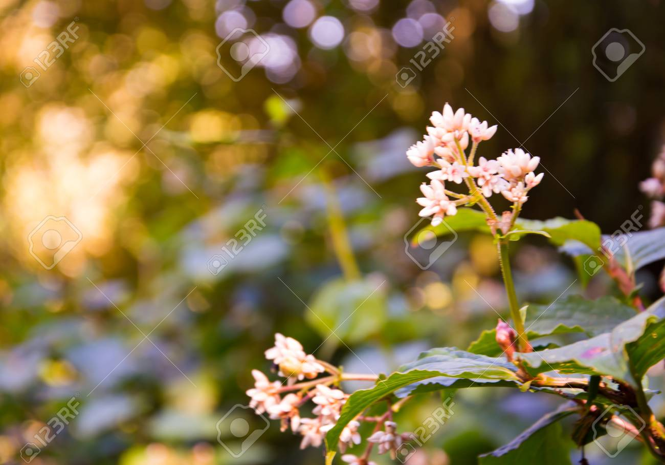 Blurred background of pink and white flowers with small bokeh blurred background of pink and white flowers with small bokeh in the green forest winter mightylinksfo