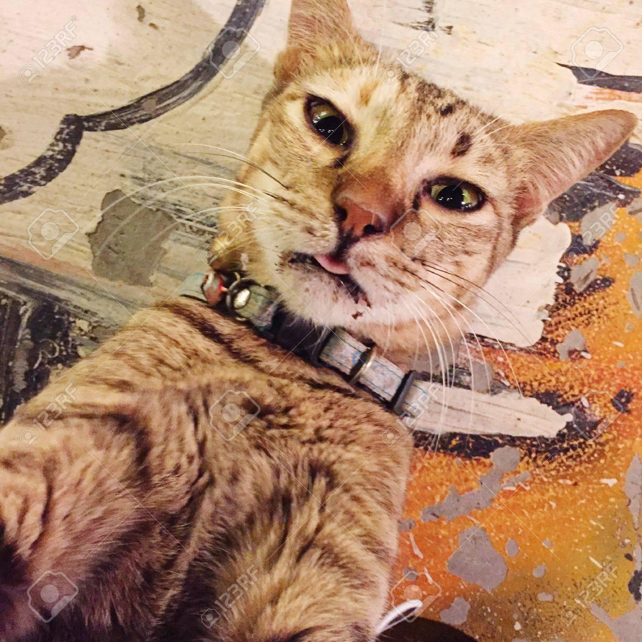 Selfie Kitty naked (55 photos), Tits, Bikini, Twitter, legs 2017