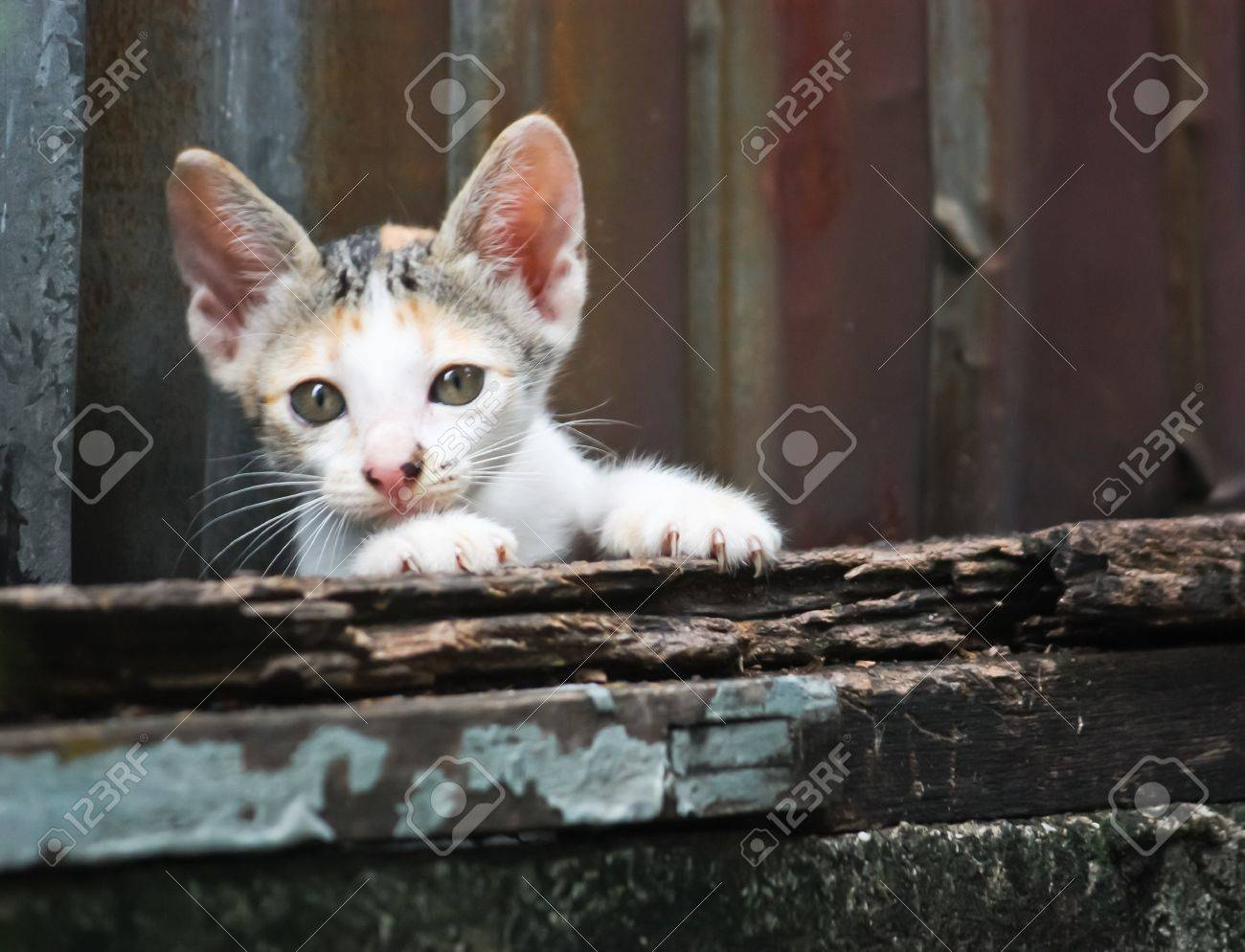 Young poor cat Stock Photo - 21530272