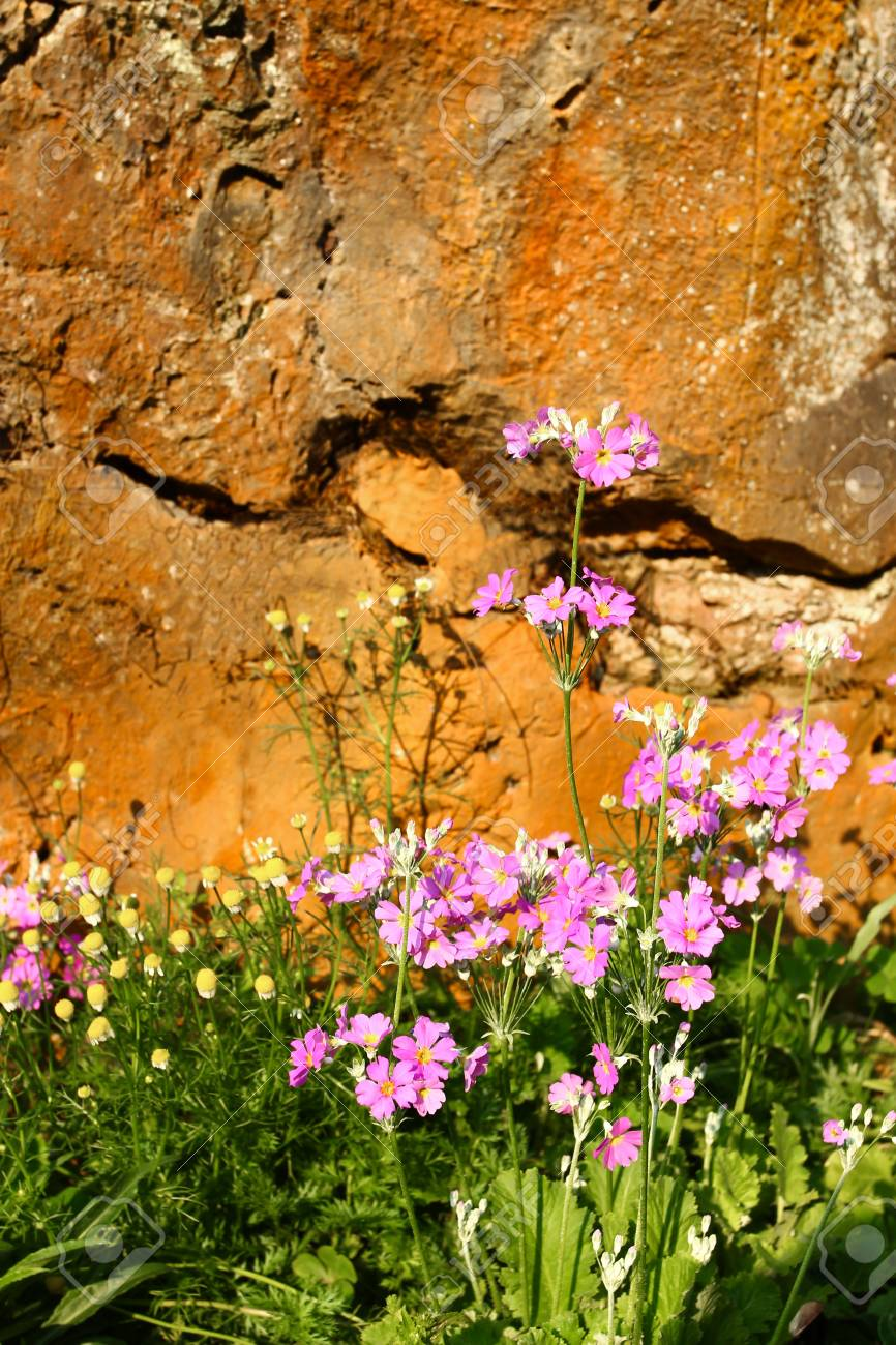 Pink flower background Stock Photo - 13009420