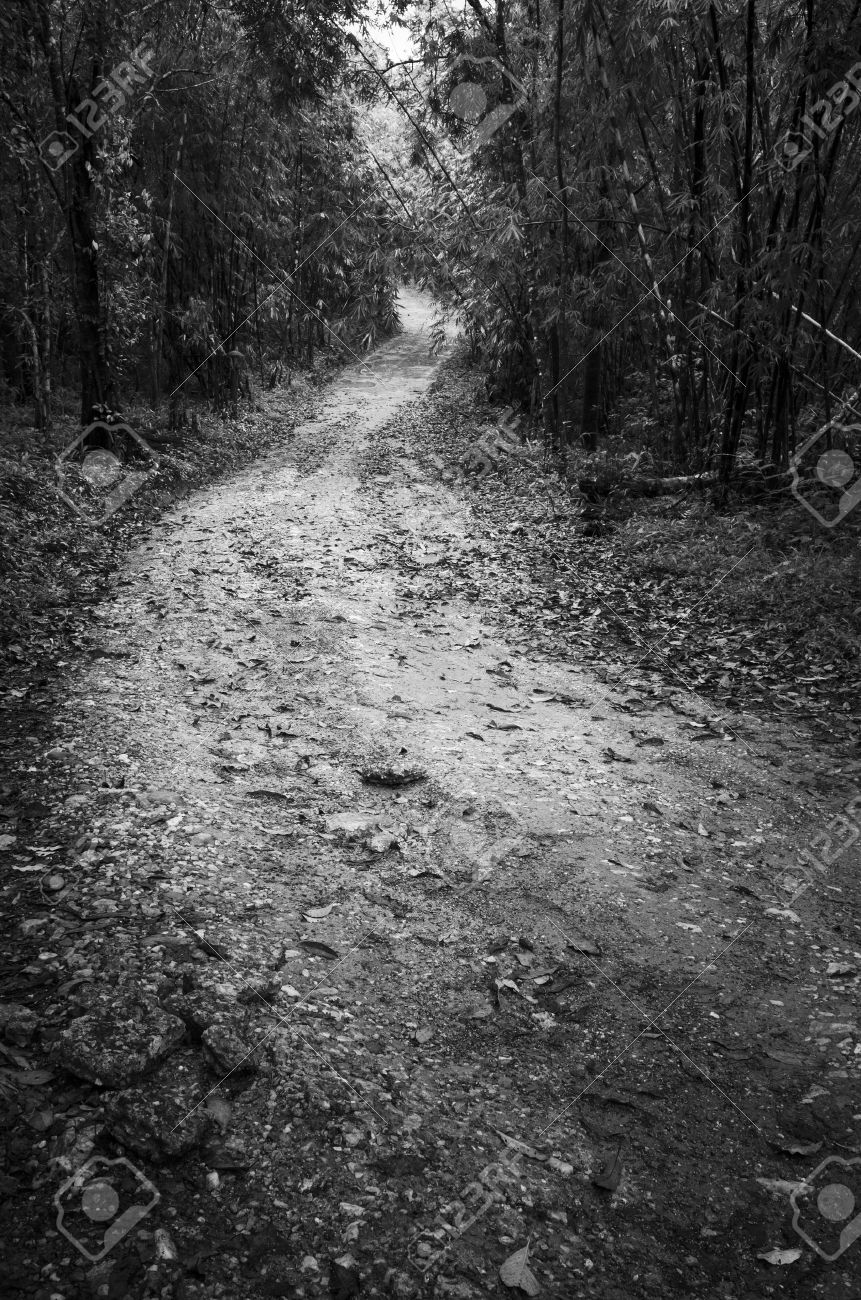 Road way in deep forest black and white stock photo 16235541