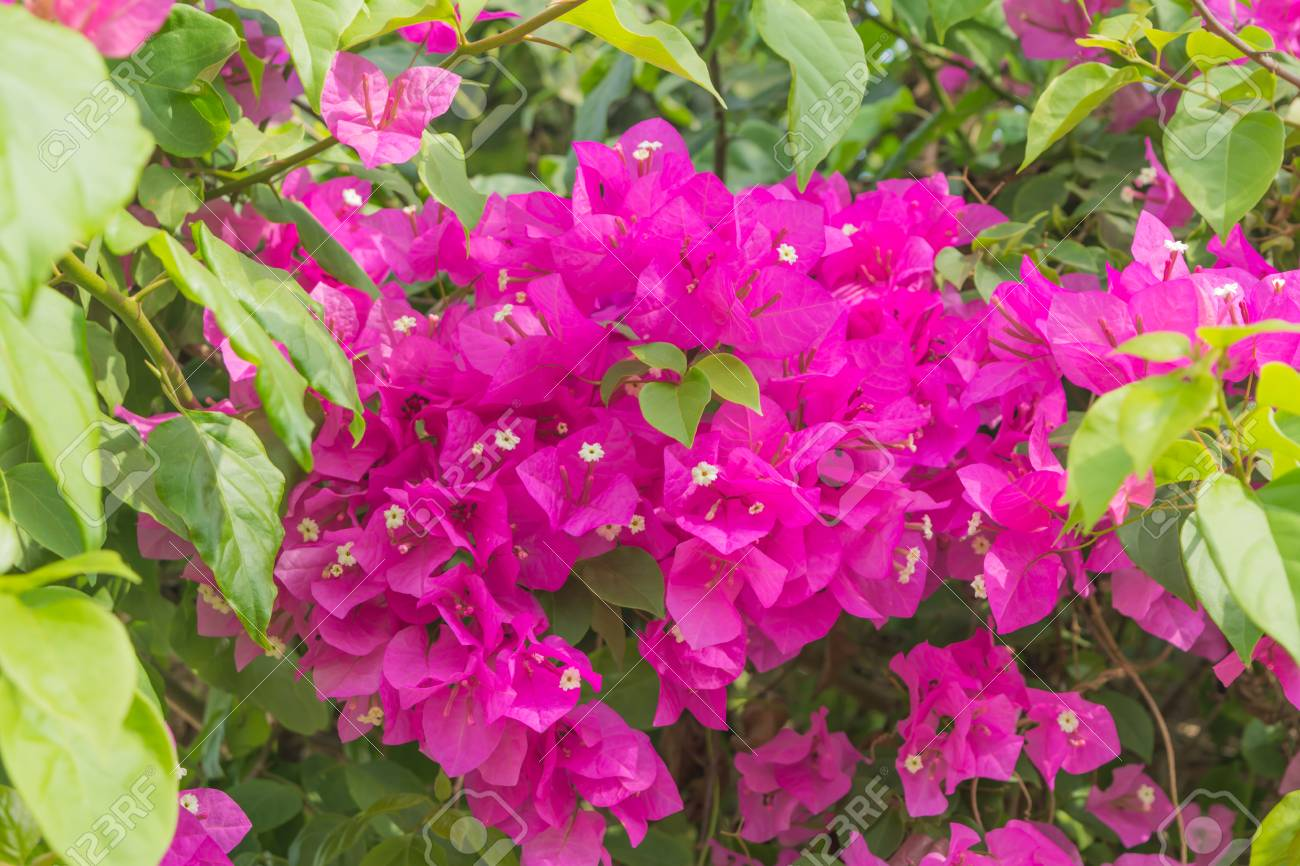Pink Flower Group Bright Flowers Background Crops Stock Photo