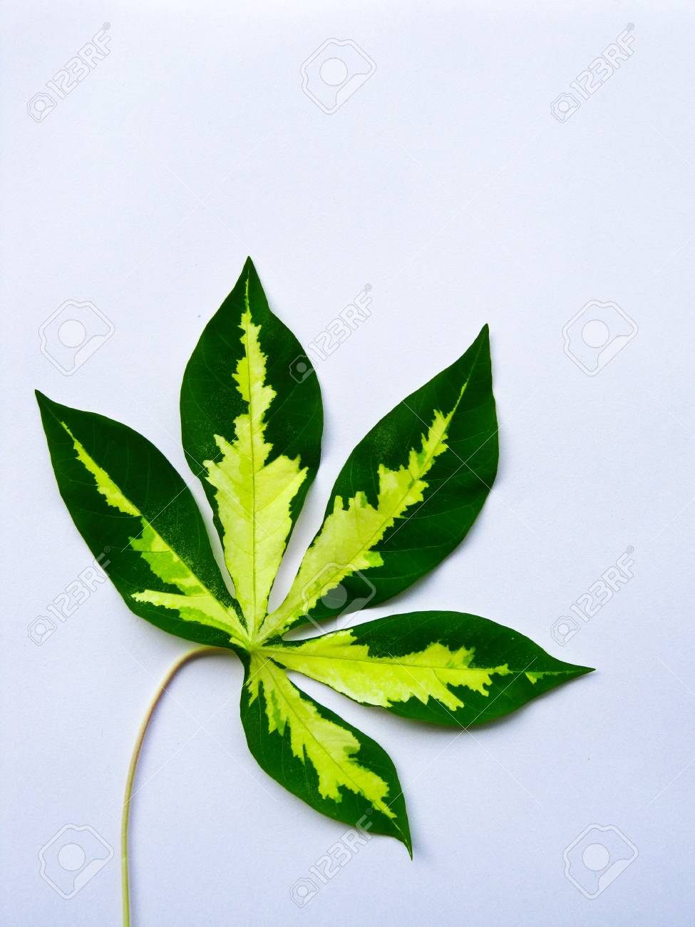 color of leaf Stock Photo - 7515732