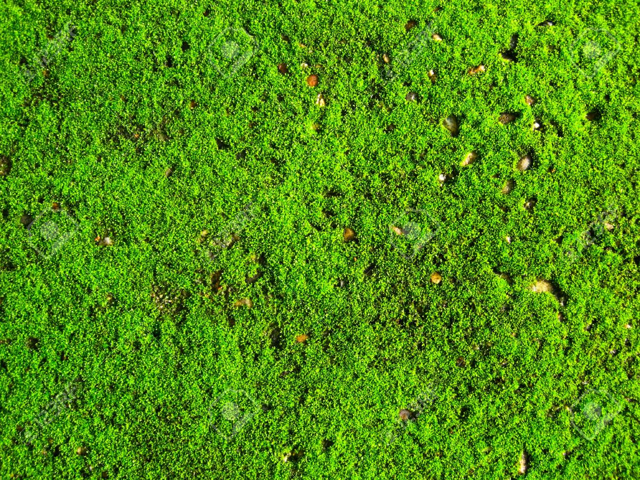 green moss Stock Photo - 7539465
