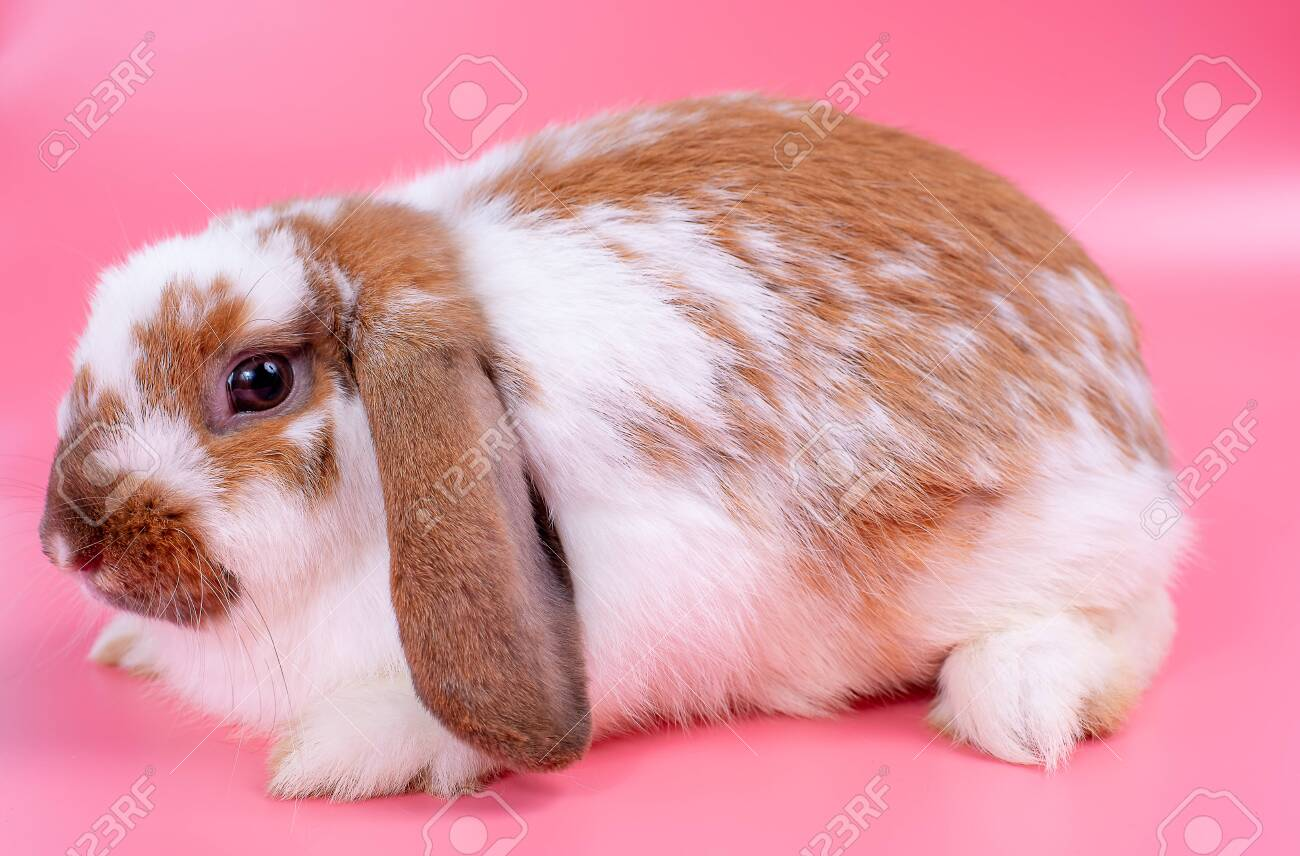 Multi Colored Bunny
