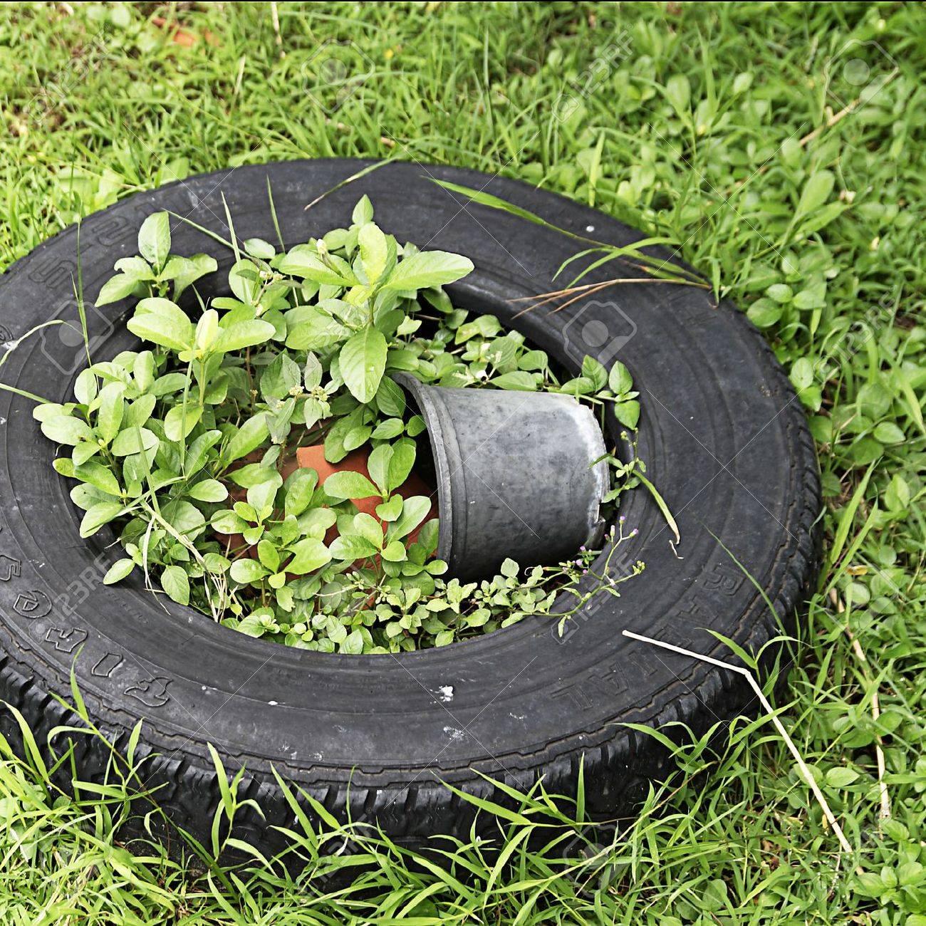 Pot De Fleur Avec Des Pneus vieux pneus dans le jardin avec fleurs cass�s � c�t� de l'herbe verte