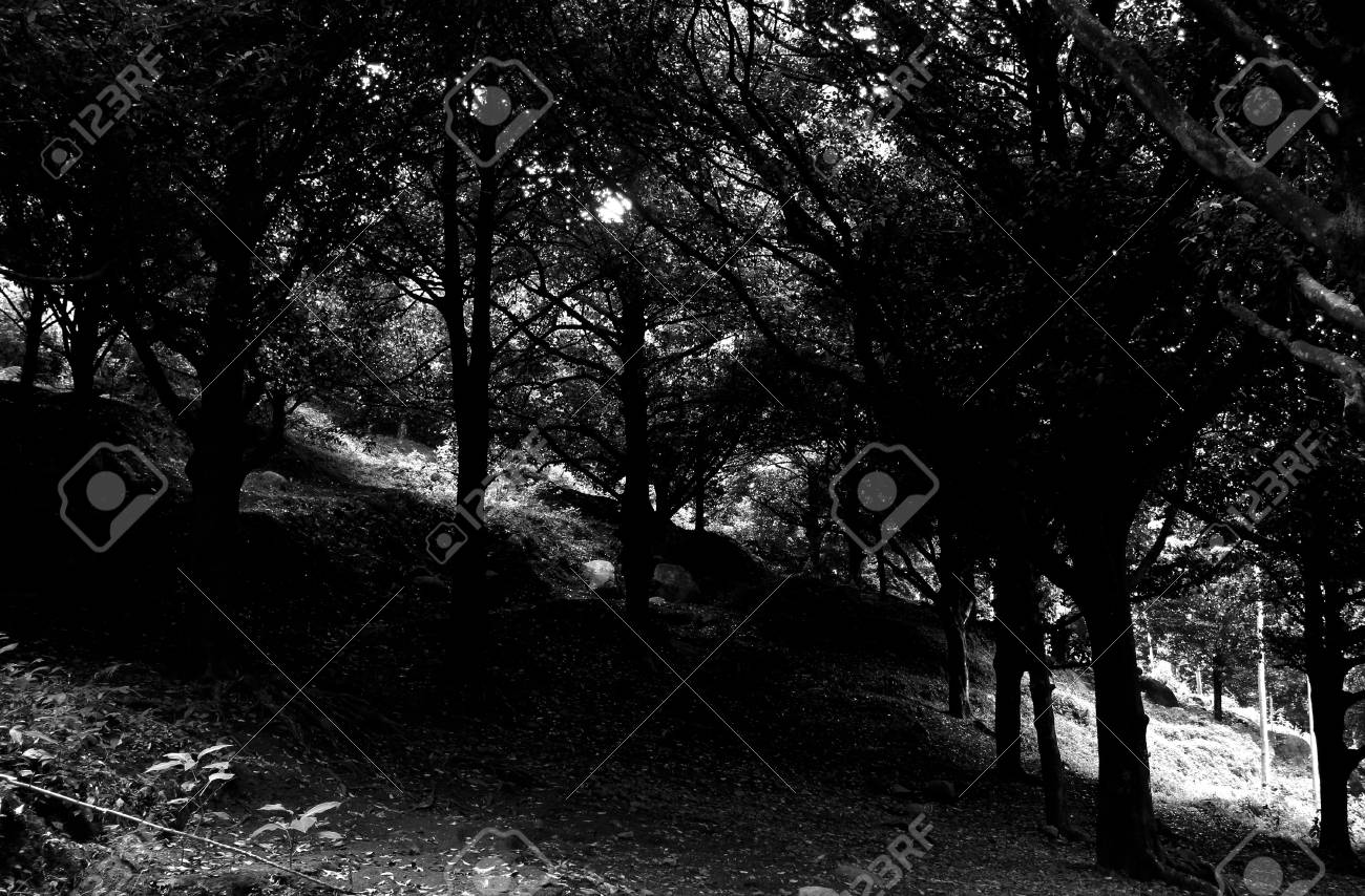 Junggle in black and white Stock Photo - 22266750