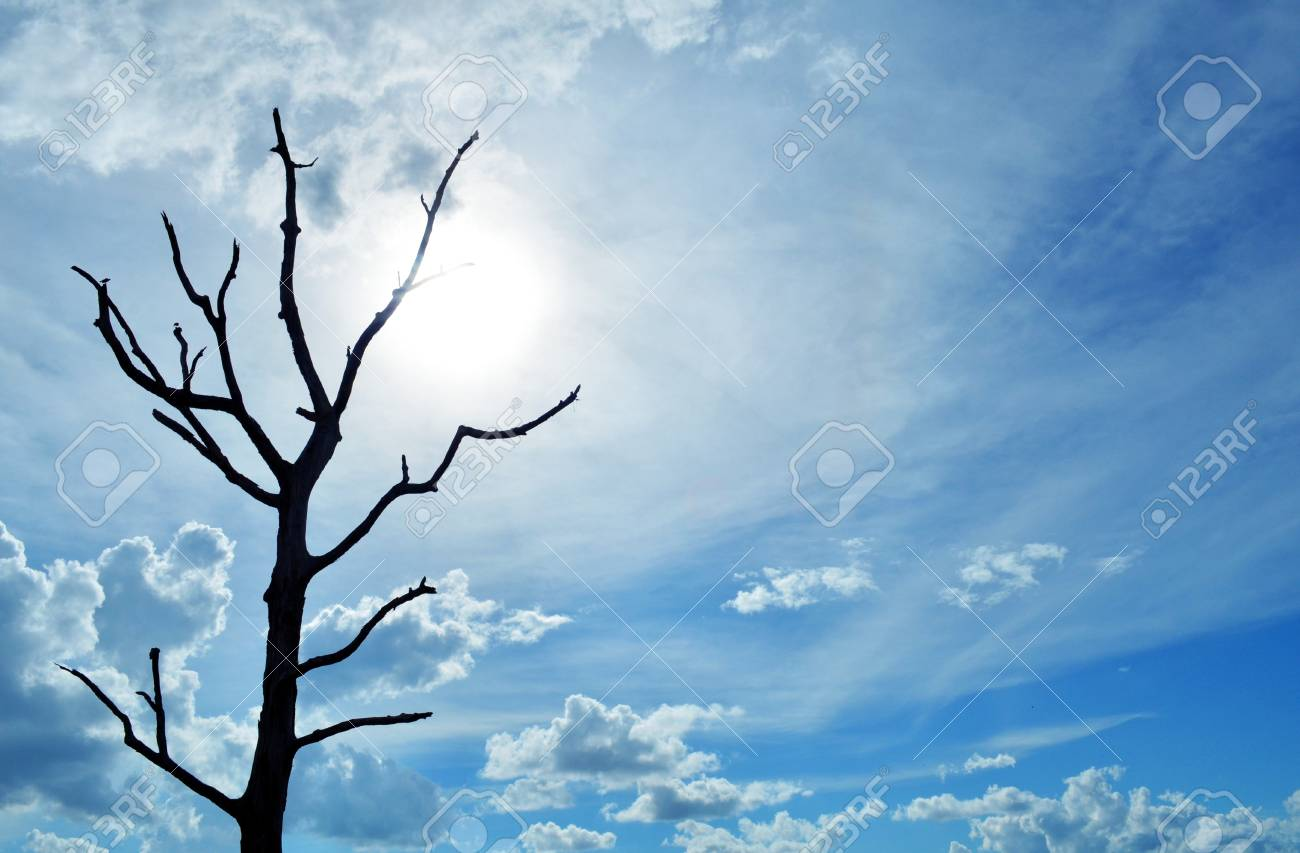 blue sky with alone tree and sunlight Stock Photo - 17168781