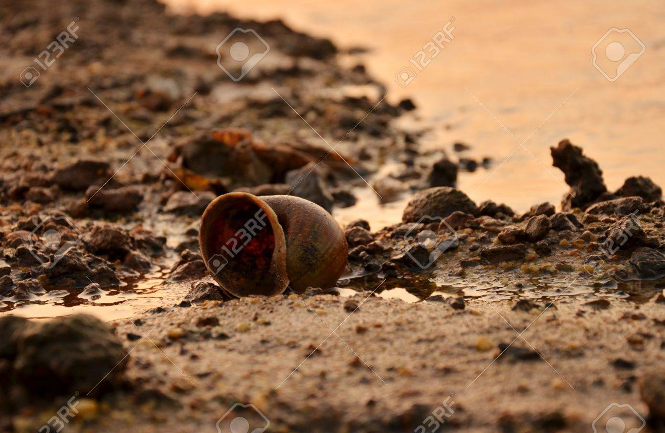 Snail shell on the beach, the effects of water pollution. Stock Photo - 17418345