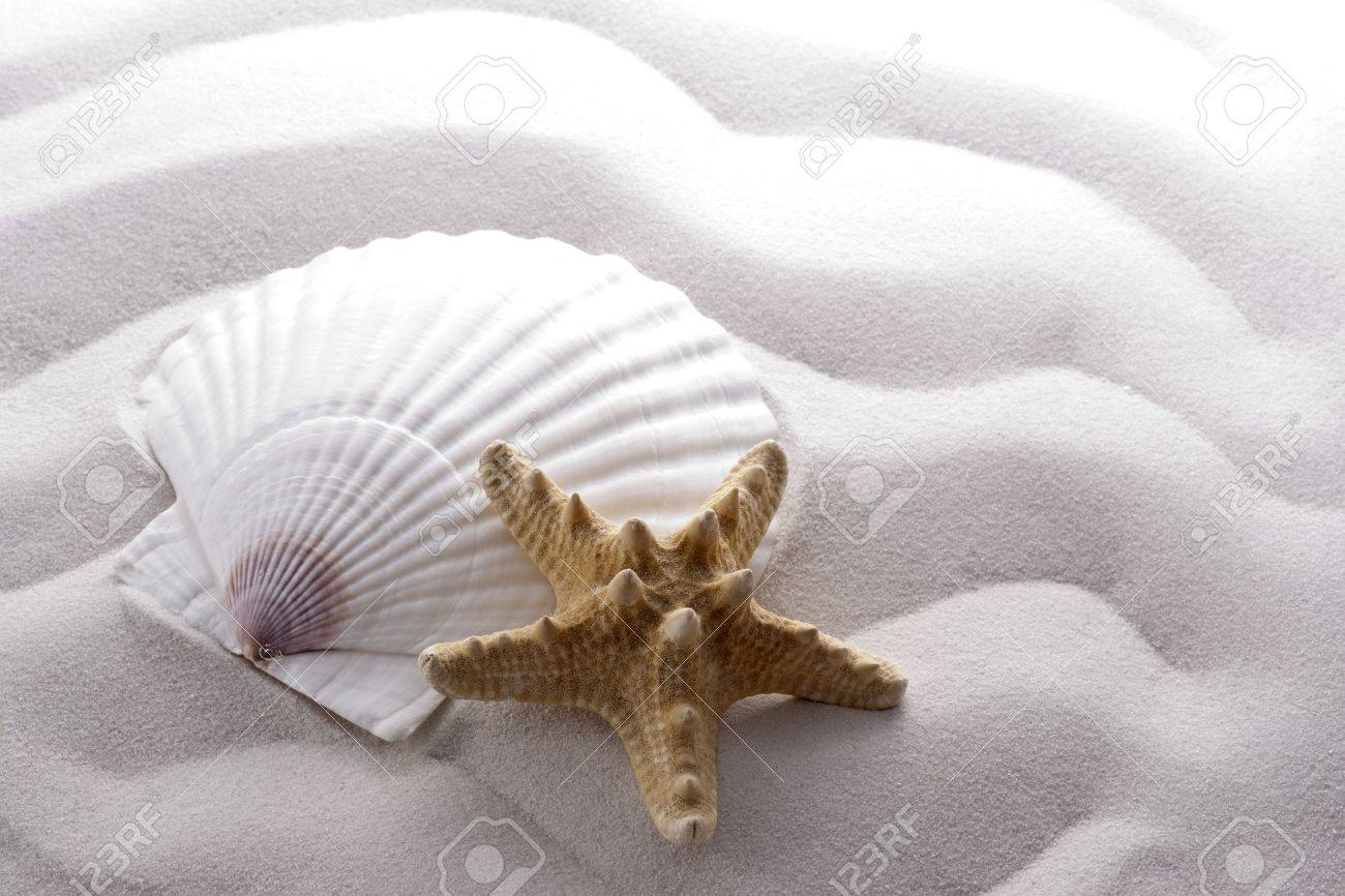 starfish and shell on white wave sand Stock Photo - 12953316