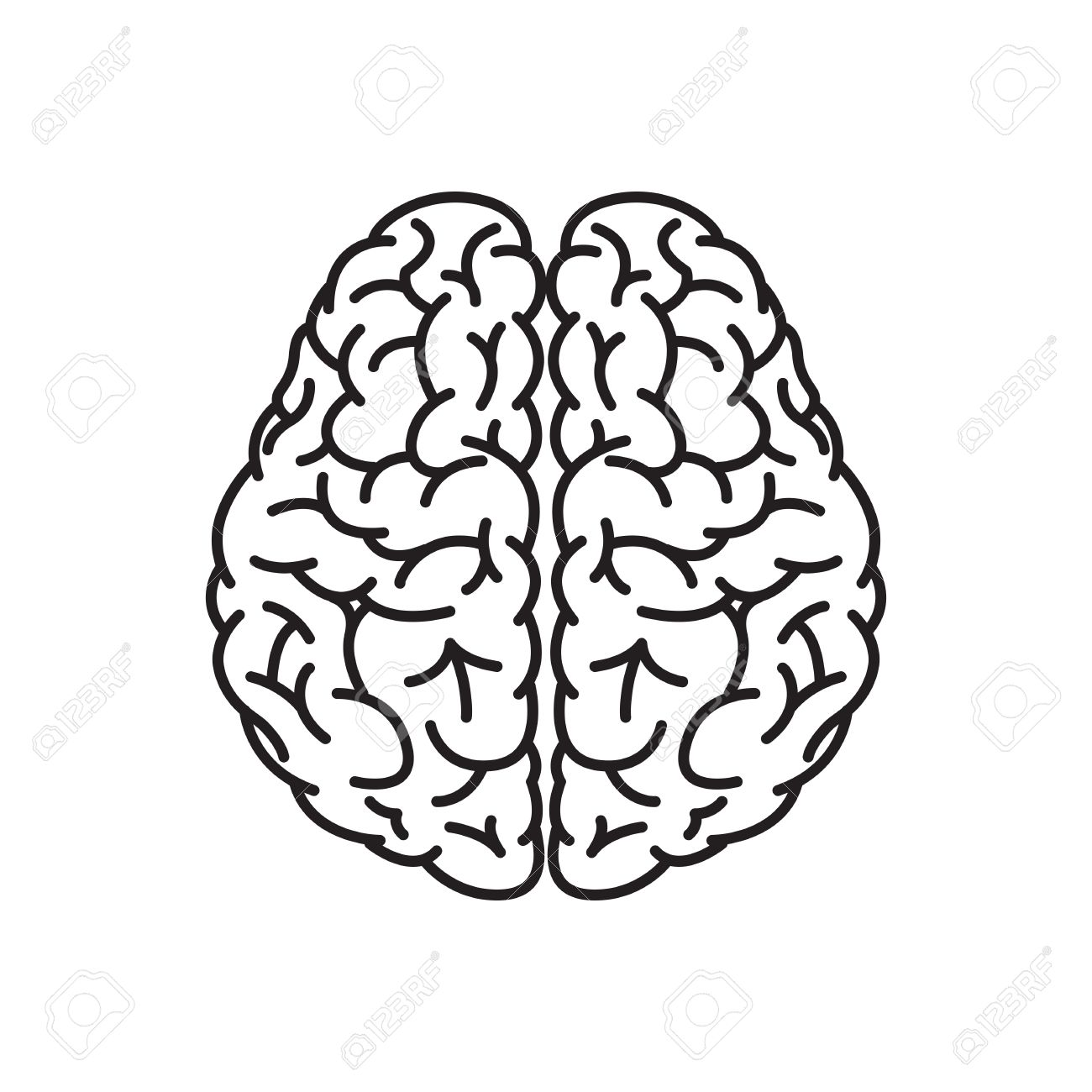 illustration of human brain outline from top view royalty free cliparts vectors and stock illustration image 55142828 illustration of human brain outline from top view