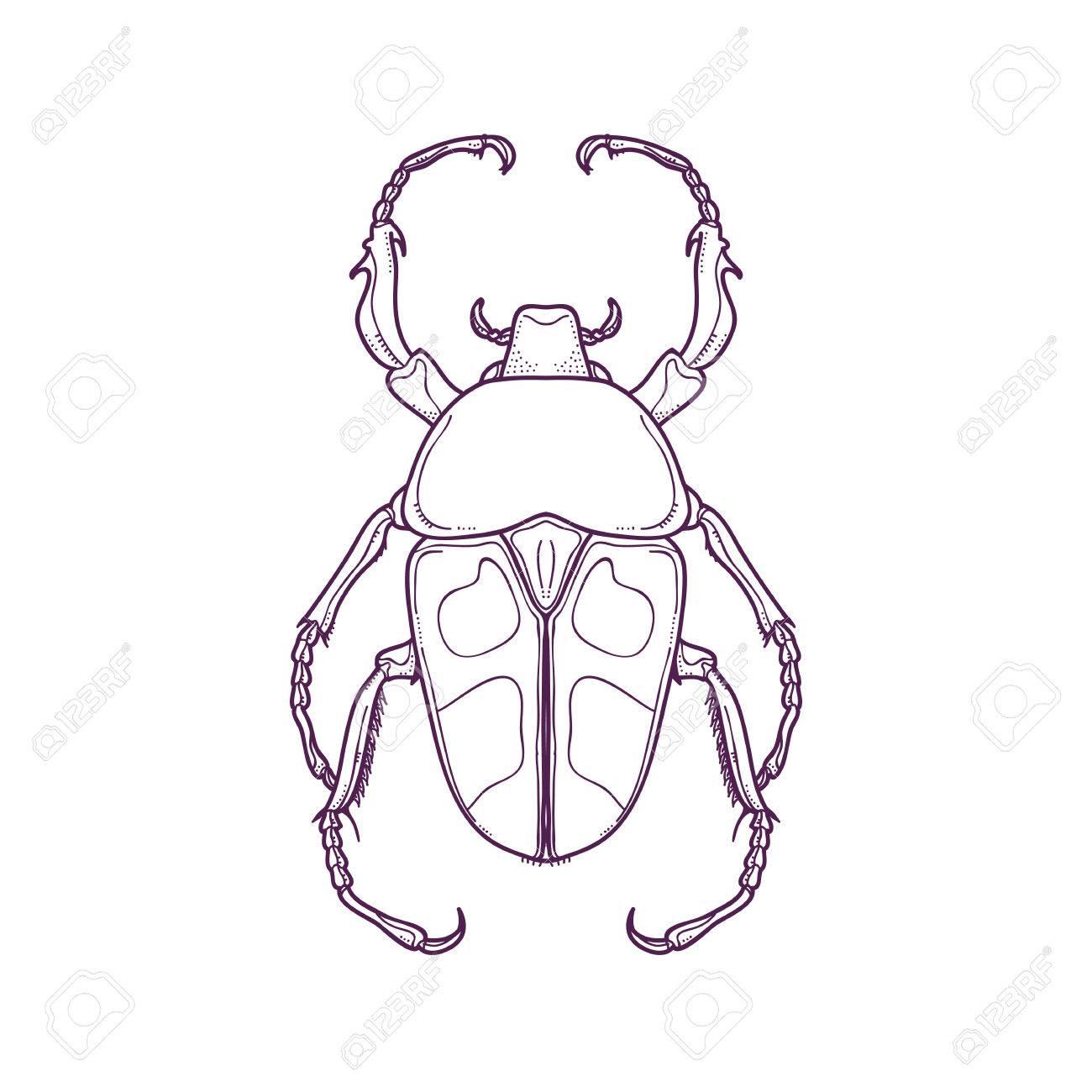 Lujo Insectos Relámpago Para Colorear Colección - Ideas Para ...
