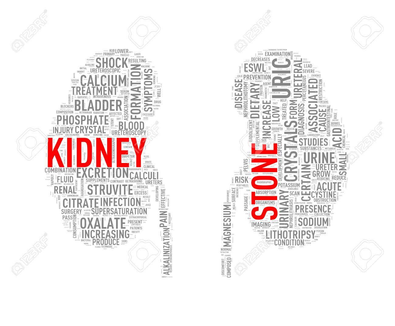 illustration of kidney shape wordcloud word tags presenting kidney