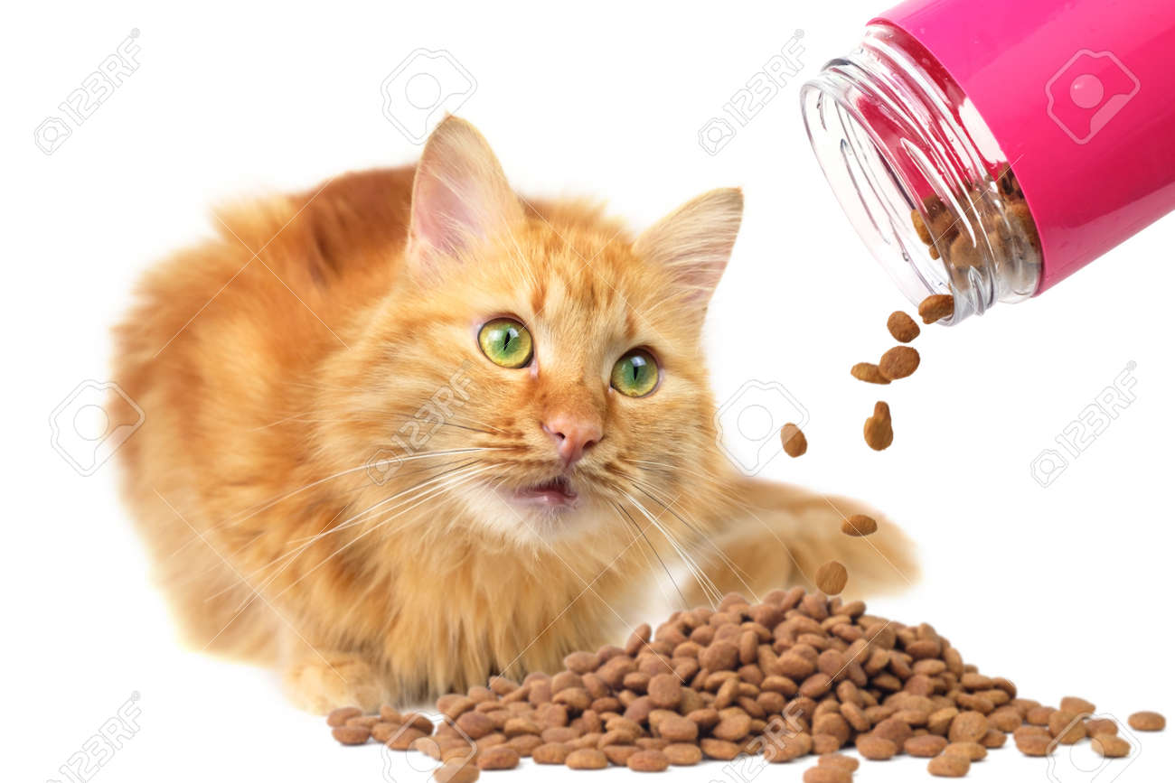 Ginger cat with green eyes looking at falling cat food, selective focus and isolated on white background - 166162872