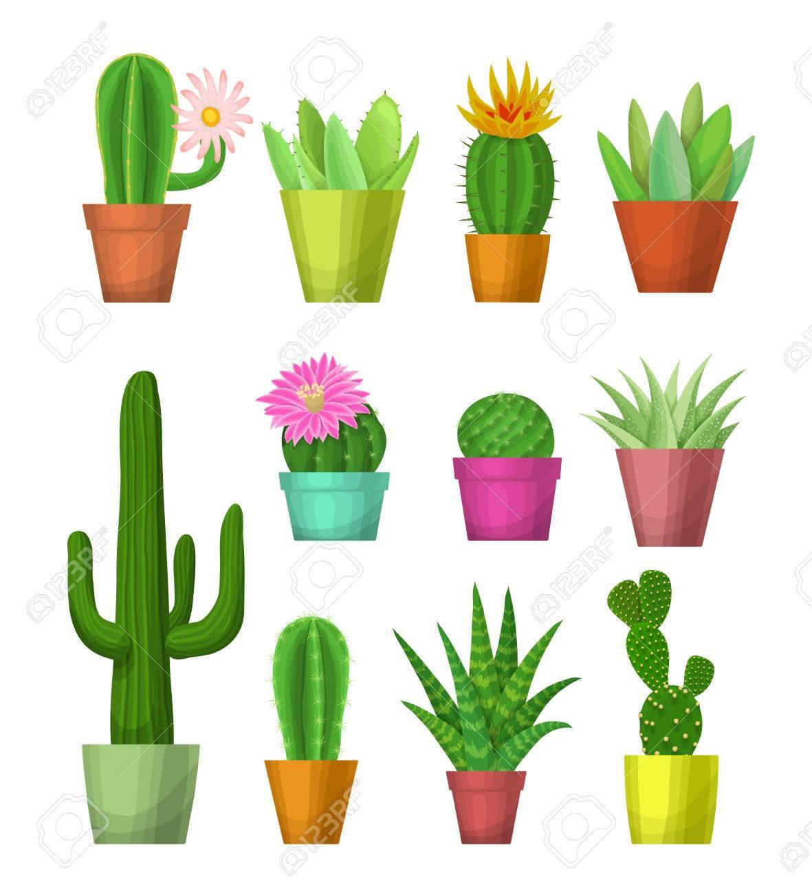 foto de archivo plantas de interior en macetas cactus y suculentas con flores en macetas ilustracin vectorial dravn mano cactus y suculentas de with plantas