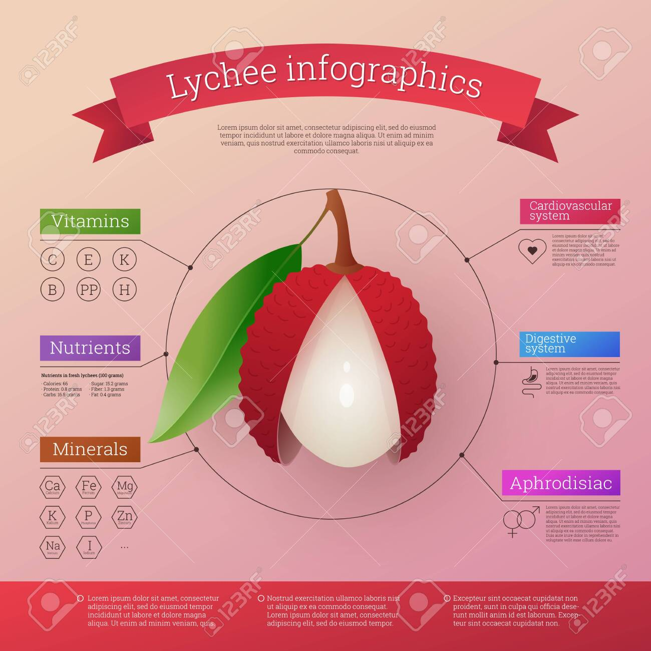 Lychee fruit infographics calories, vitamins and minerals. Healthy facts value nutritional information. Fresh ripe exotic tropical fruit benefits. Healthy diet vector illustration - 152461365
