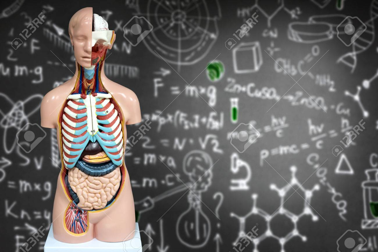 Human Anatomy Mannequin On The Background Of Chemical Formulas