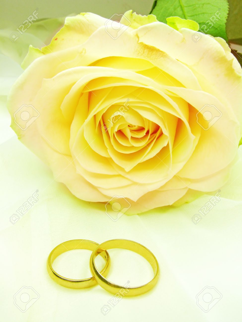 Stock Photo Yellow Rose And Wedding Rings On Satin Beige Background: Yellow Roses Wedding Rings At Reisefeber.org