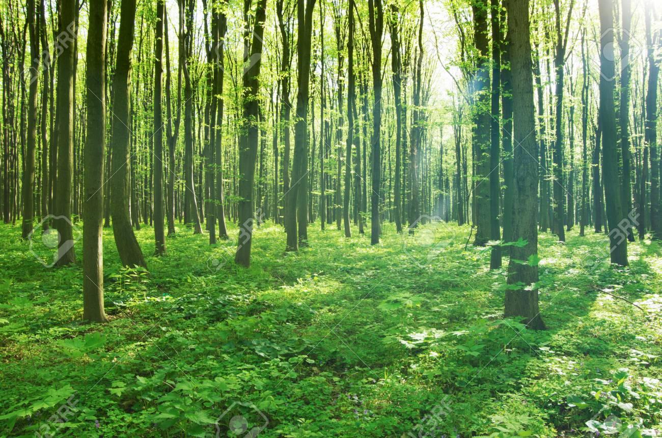 RP Concours    Les prémices de l'été [ Lisa & Catherine ] 39682228-for%C3%AAt-verte