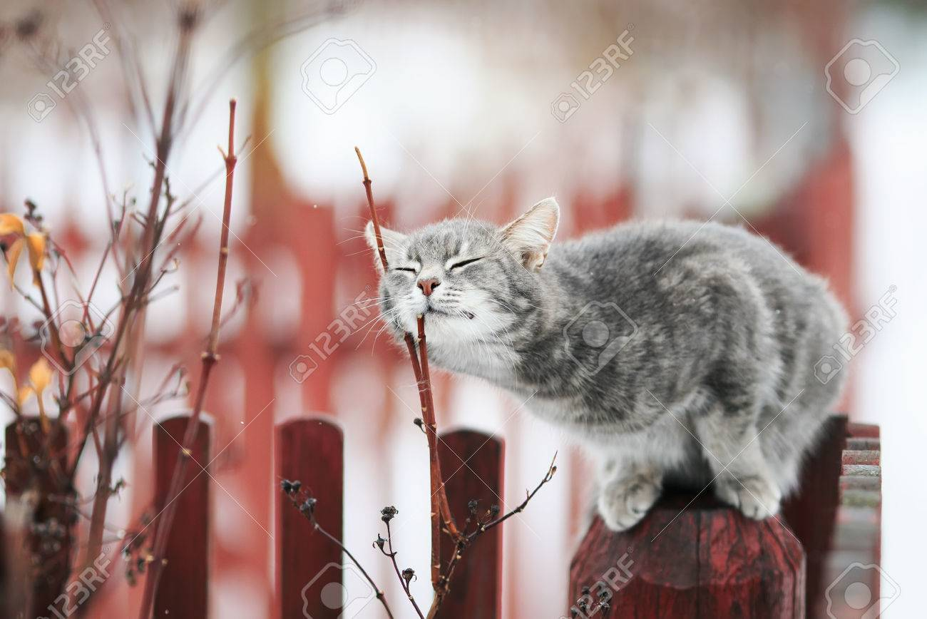 sweet tabby cat fondled on a branch in spring on a fence Stock Photo - 73005576