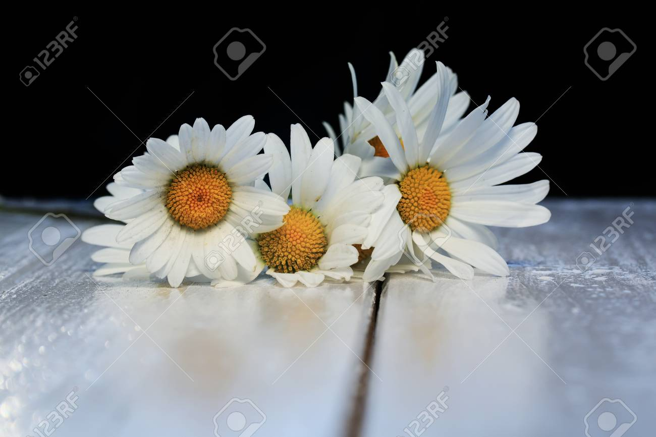 Beautiful Bouquet Of Delicate White Flowers Daisies On Shiny Stock