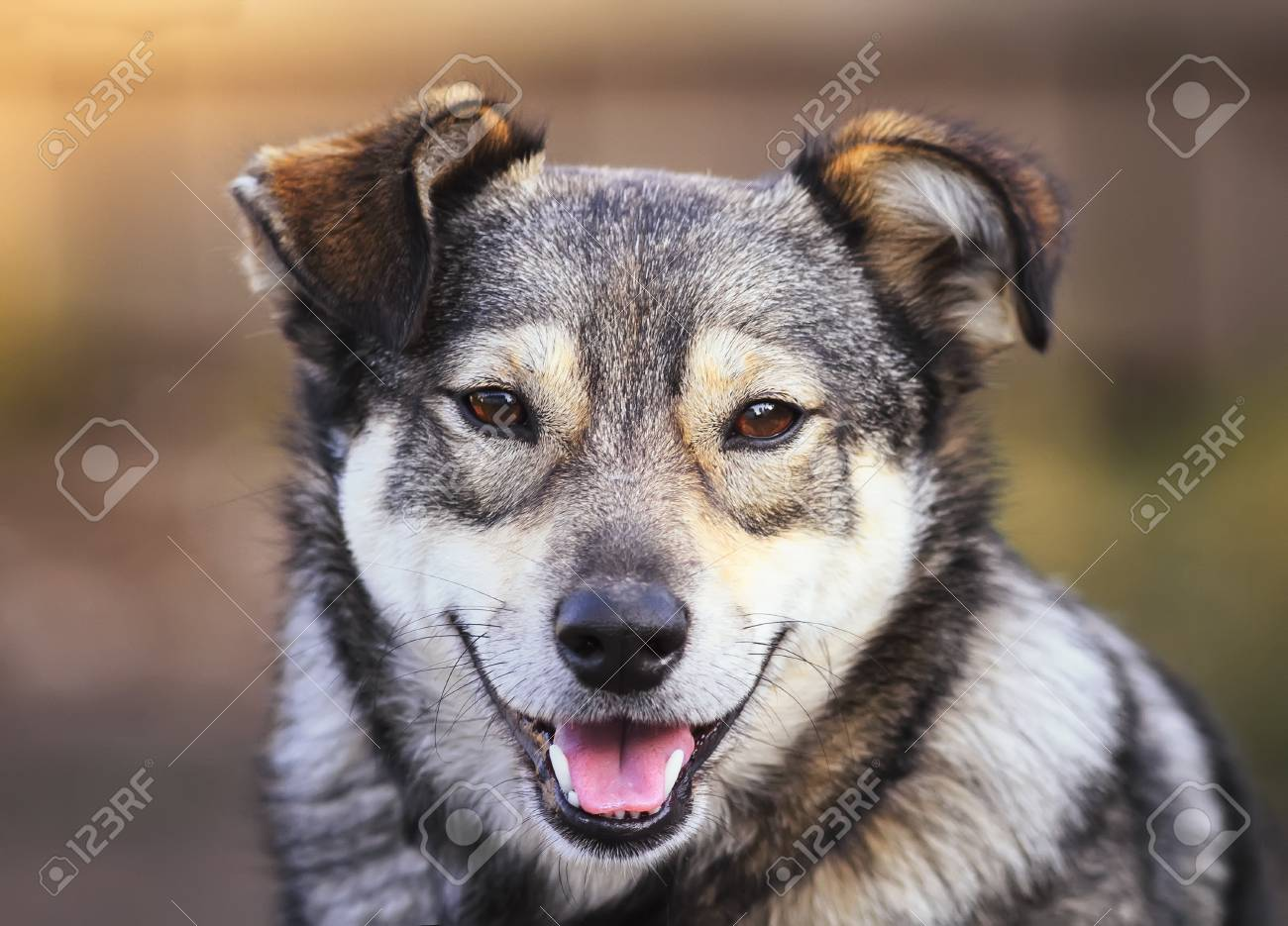 Portrait Of Cute Funny Dog Puppy Mutts Smiling Friendly Stock Photo Picture And Royalty Free Image Image 98377143