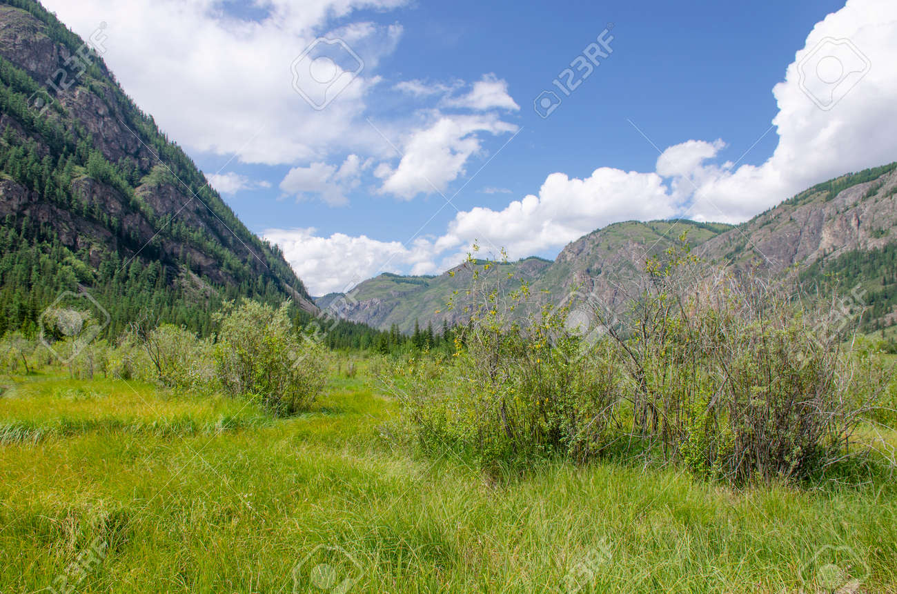 Landscape of Altai mountains in Russia with forest and plants - 152468920