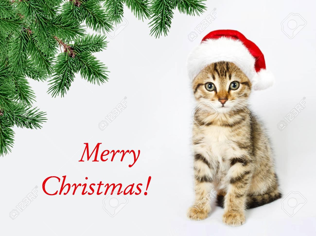 Kätzchen In Einem Roten Sankt-Hut. Frohe Weihnachten, Frohes Neues ...