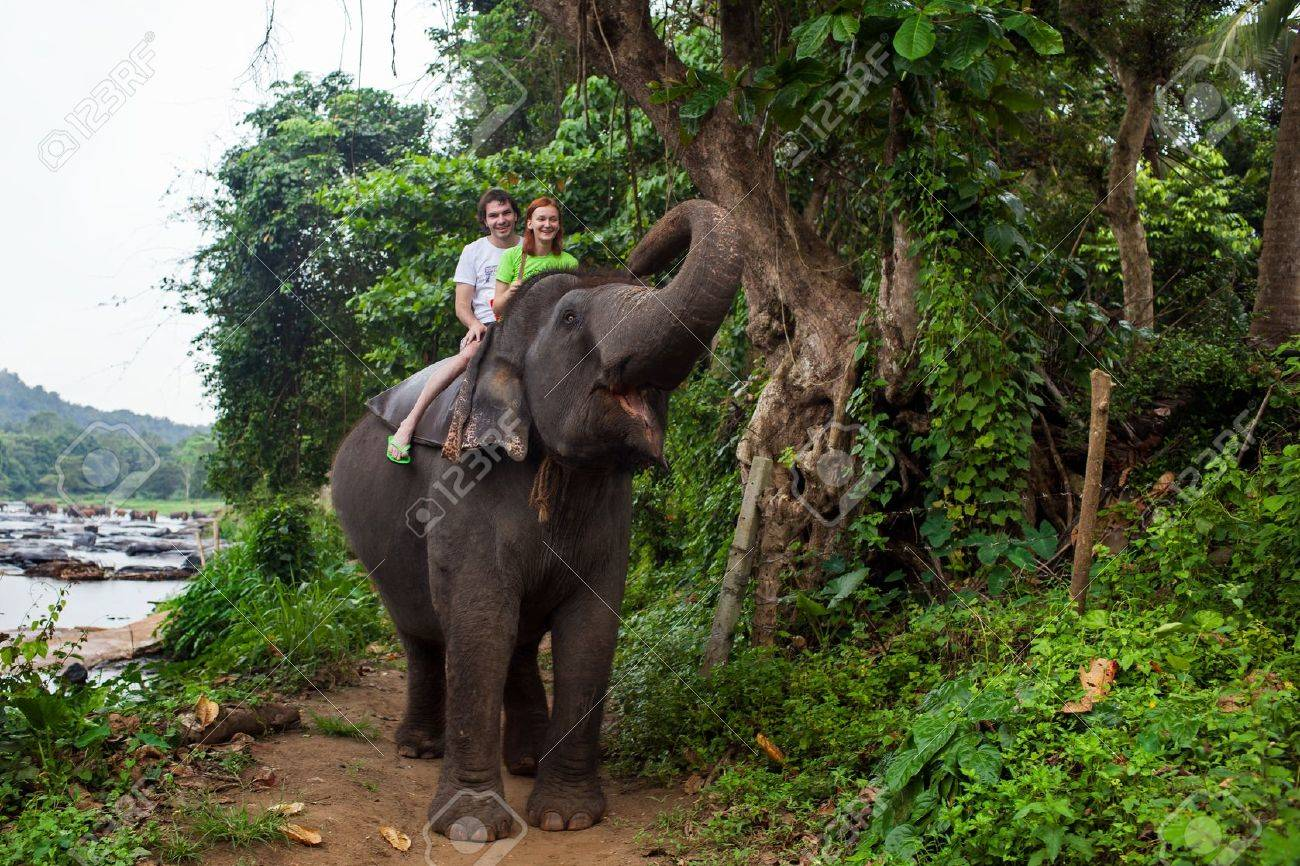 Young couple tourists to ride on an elephant in Pinnewala, Sri Lanka. - 20873445