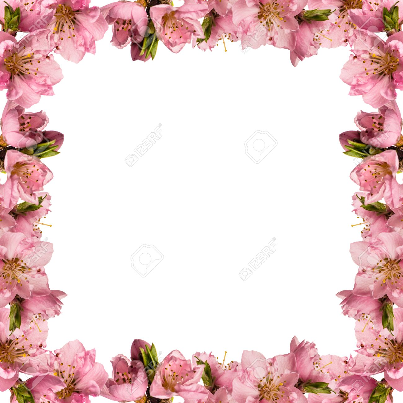 Beautiful Frame With Peach Flowers Stock Photo, Picture And Royalty ...