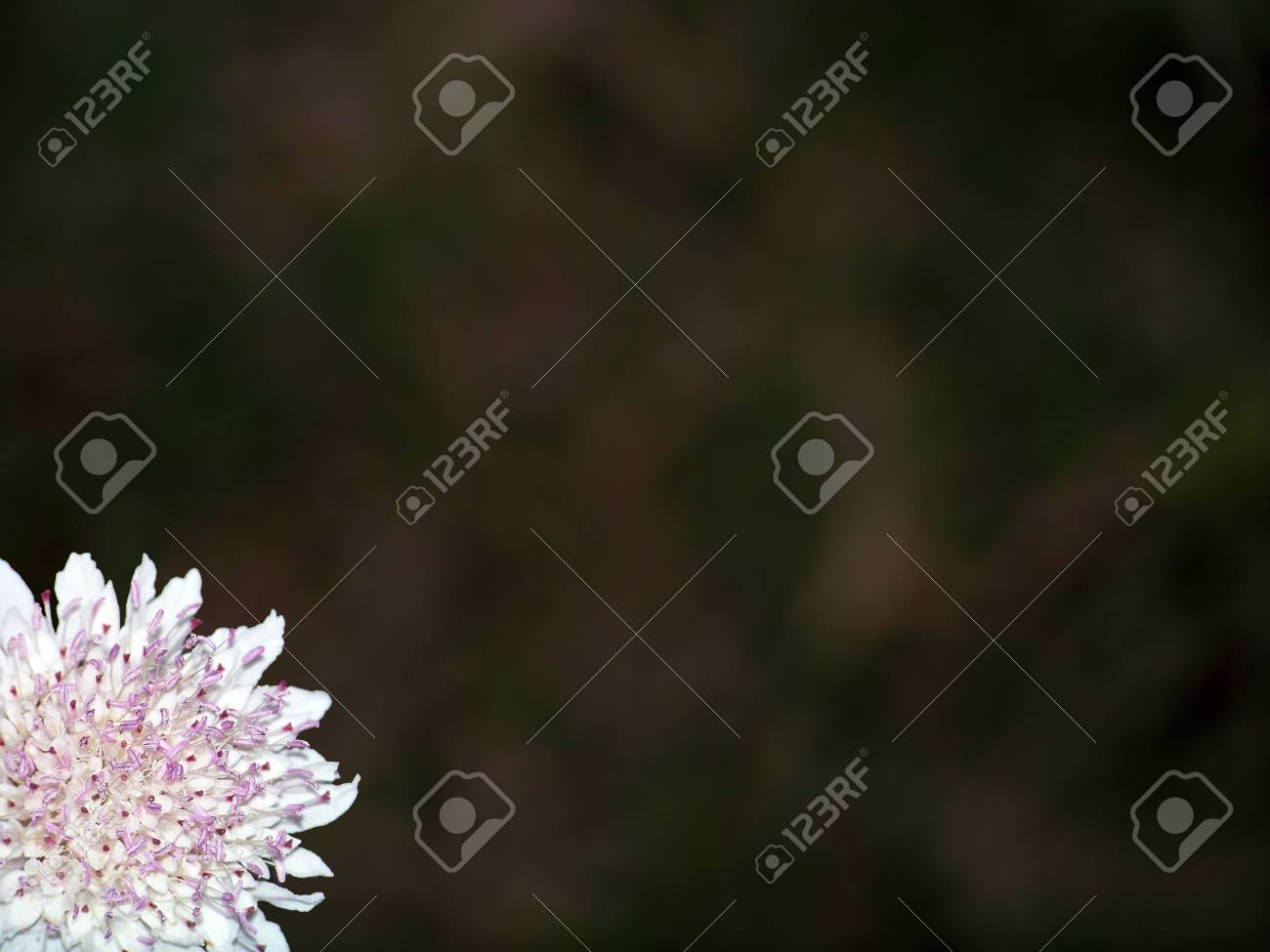 Delicate pink flower close up on a corner Stock Photo - 6095699