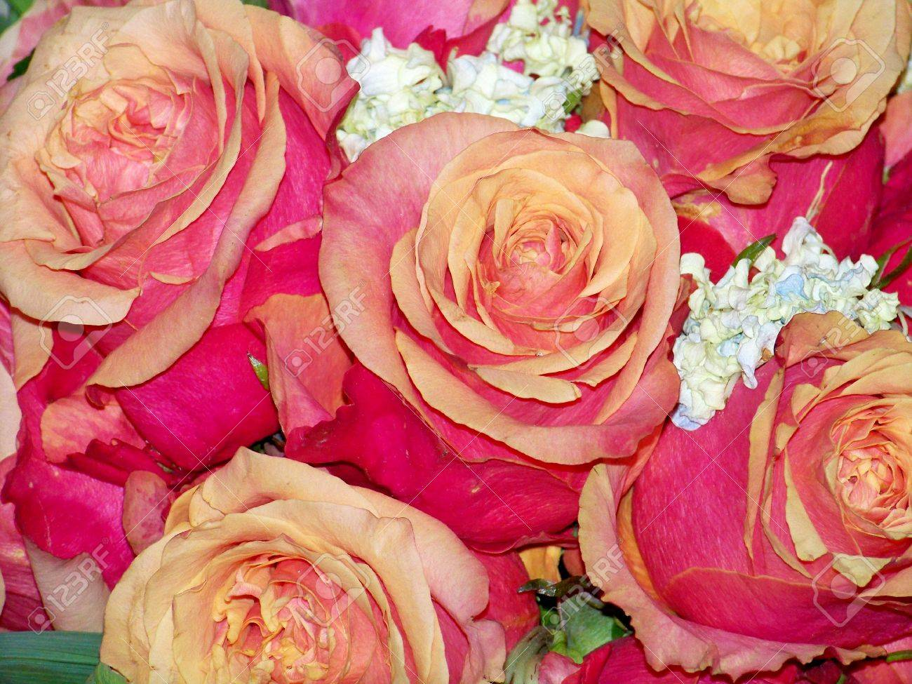 Pink and orange roses romantic wedding or Valentines bouquet Stock Photo - 11734826