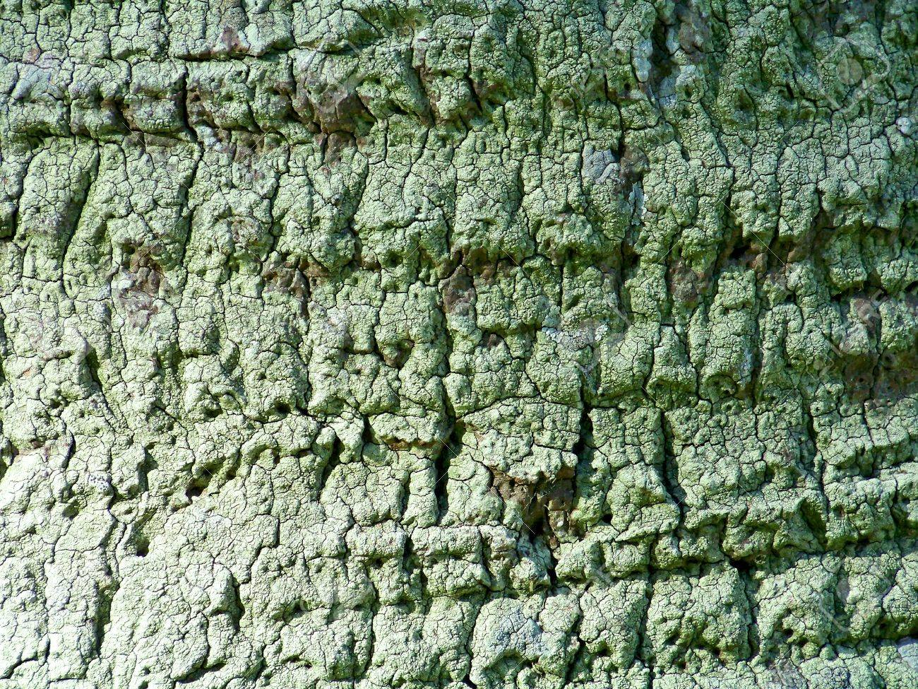 Rough green bark texture of a natural palm tree trunk surface Stock Photo - 13385698