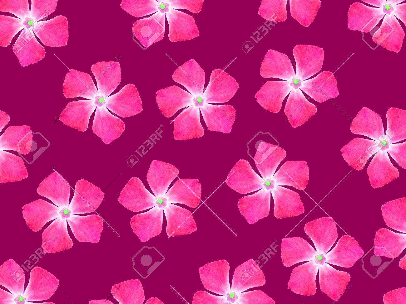 Pink Flowers Over Redish Purple Backdrop Stock Photo Picture And
