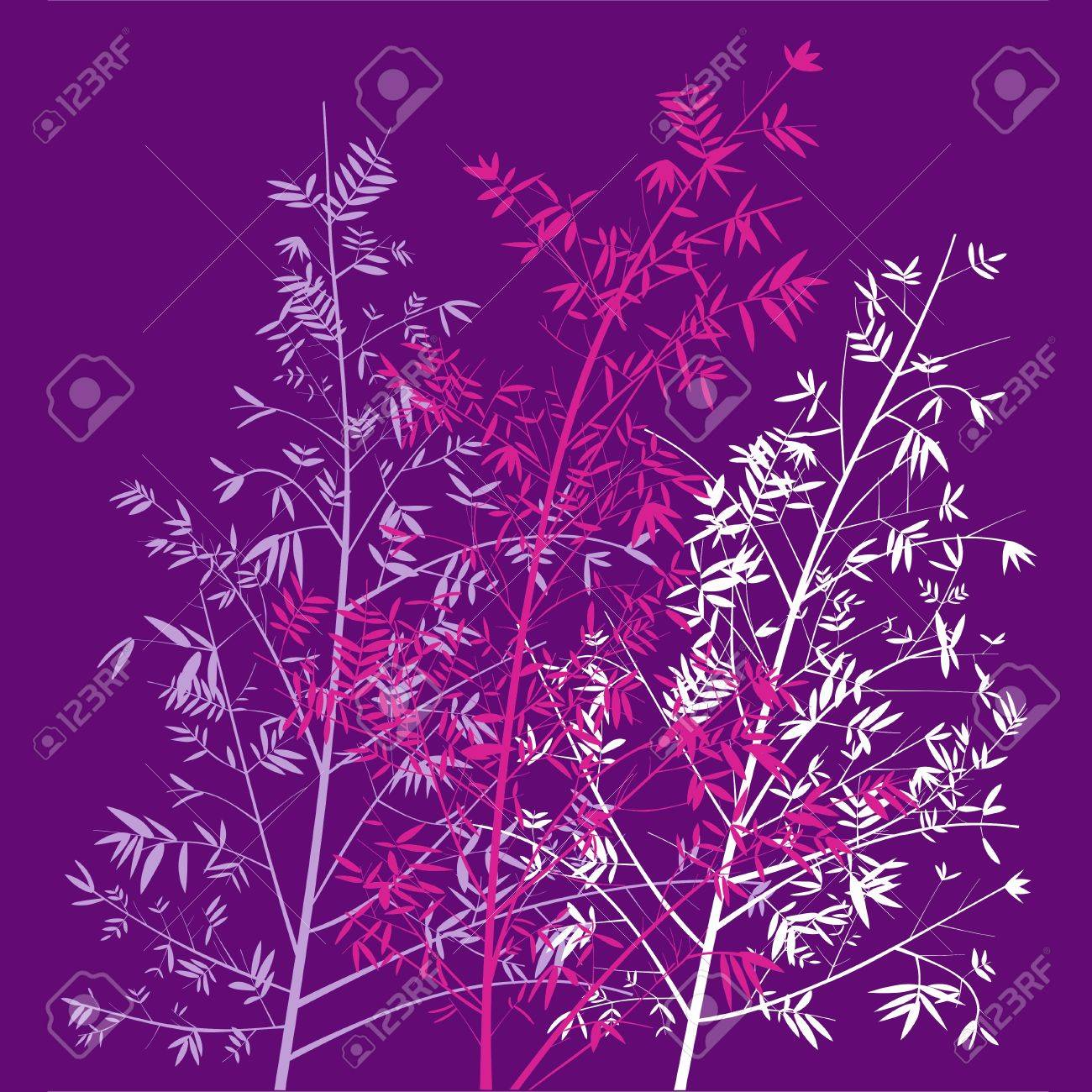 Bamboo Plants On Violet Background Stock Photo Picture And