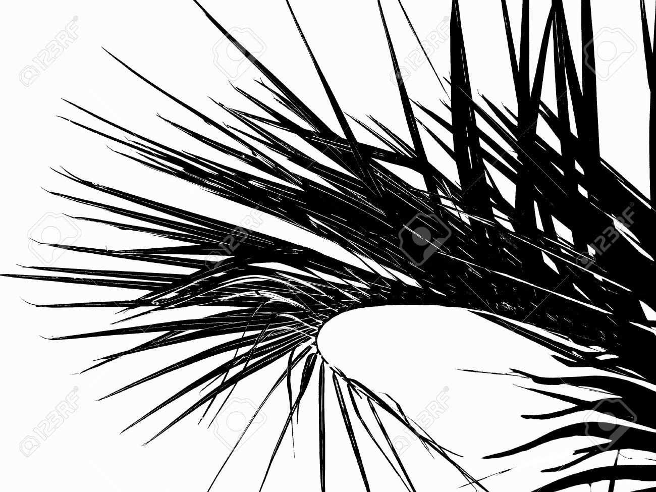 Illustration palm leaves silhouette illustration in black isolated on white