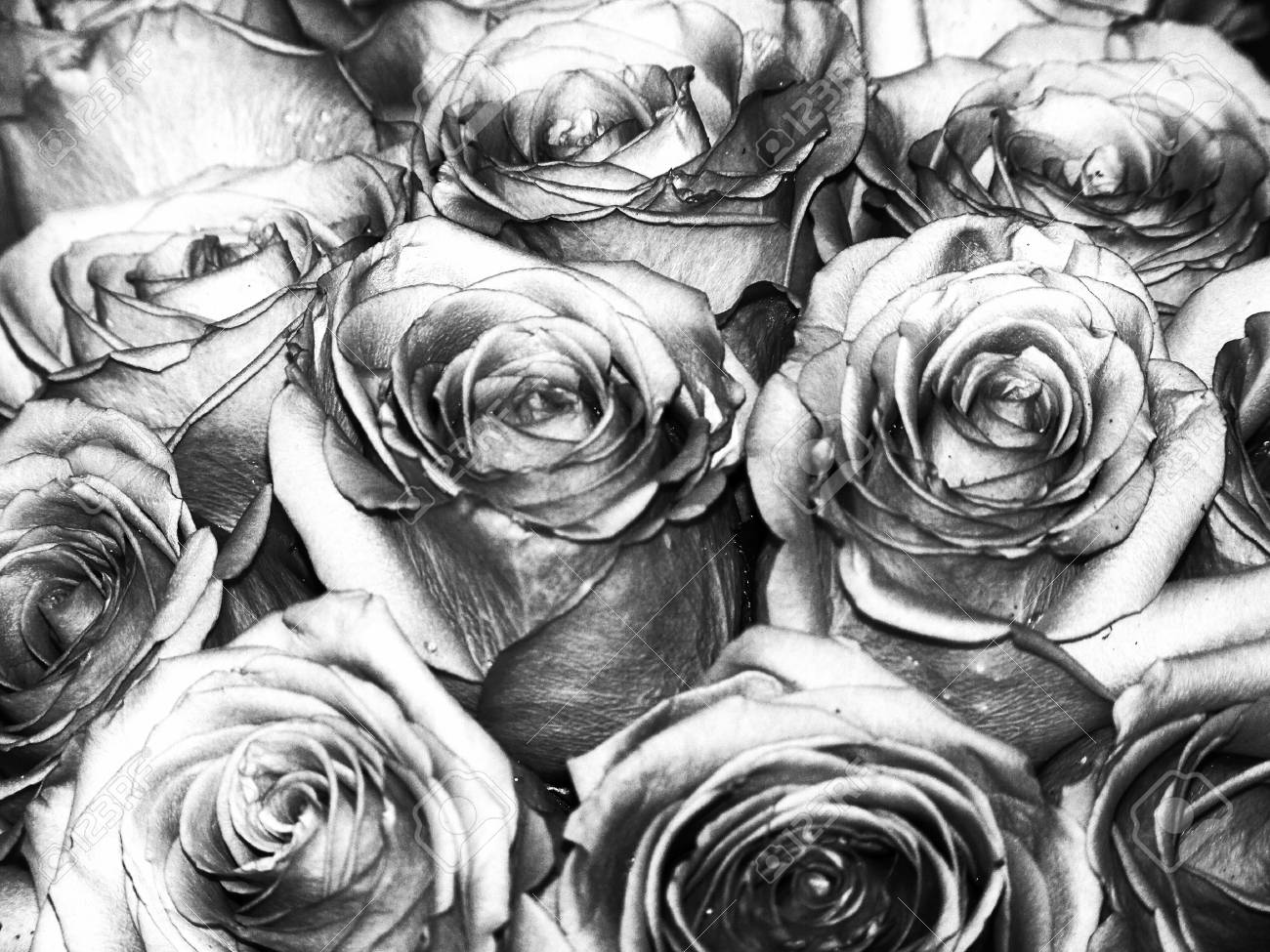 Silver Roses Bouquet Close Up Background Stock Photo