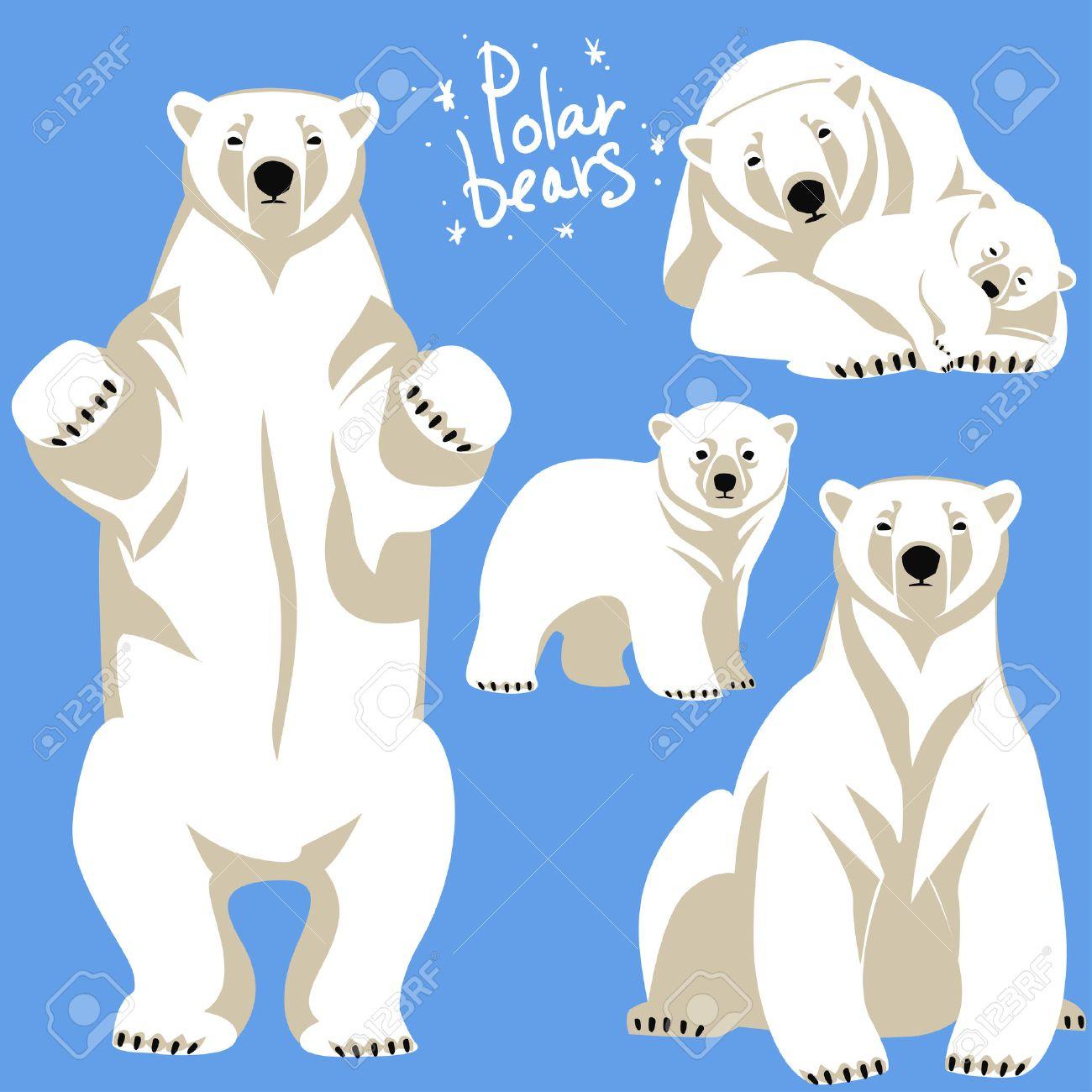 polar bear stock photos royalty free polar bear images and pictures