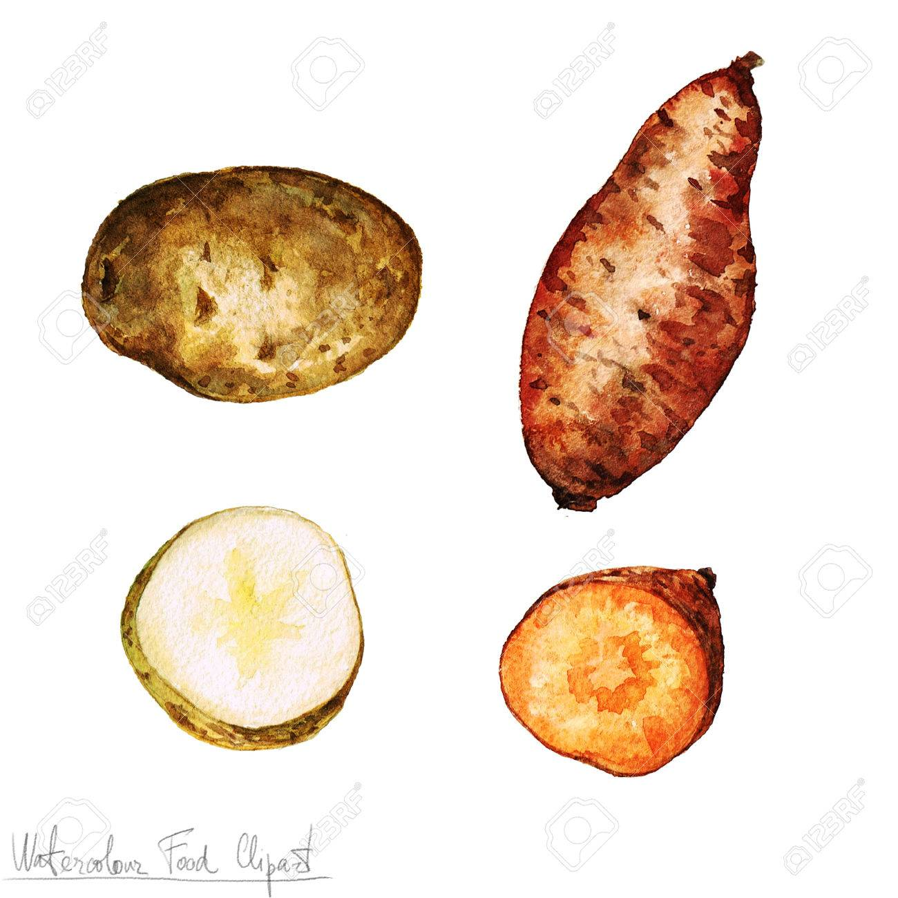 Watercolor Food Clipart - Potato - 53245598