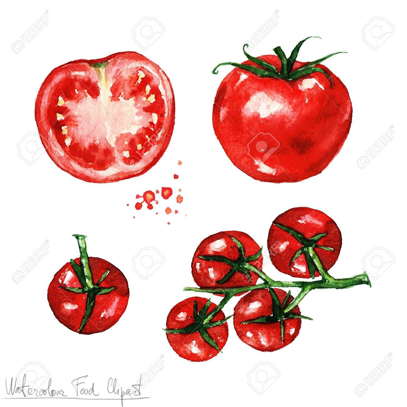 水彩食べ物クリップアート トマト の写真素材画像素材 Image 53245669