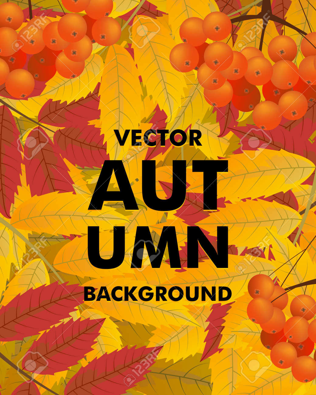 Autumn vertical background with rowan, berries and leaves, fall. Vector illustration. - 155971627