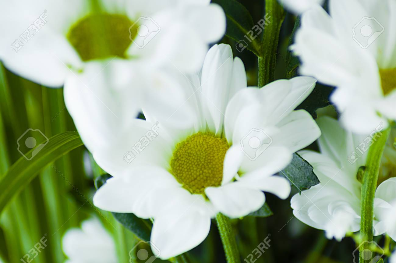 Bouquet Of Flowers Chrysanthemum White On A Light Background Stock