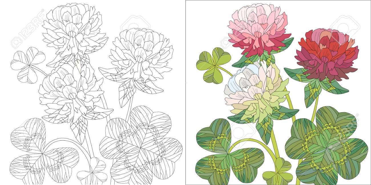 Dessin élégant De Trèfle Rouge Avec Des Fleurs Roses De Rose Et De Feuilles Vertes Vecteur De Couleur Et Aperçu Ensemble