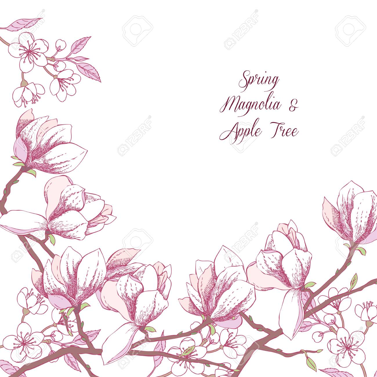 Background With Magnolia And Apple Tree Hand Drawn Spring Flowers