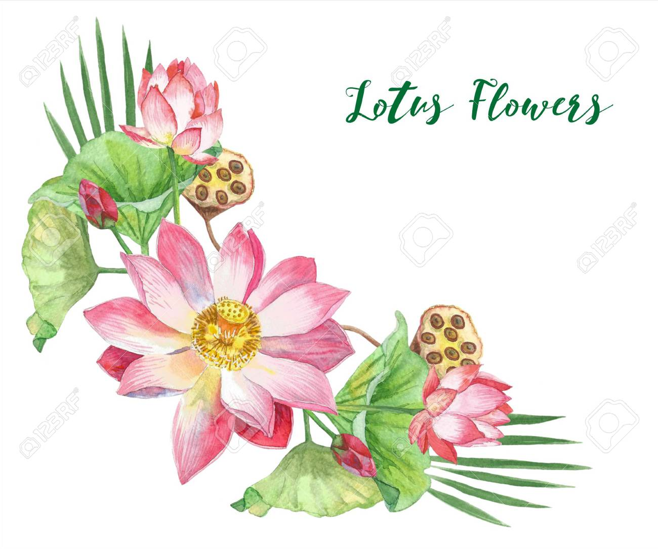 Lotus Flowers Hand Painted Watercolor Illustration Stock Photo