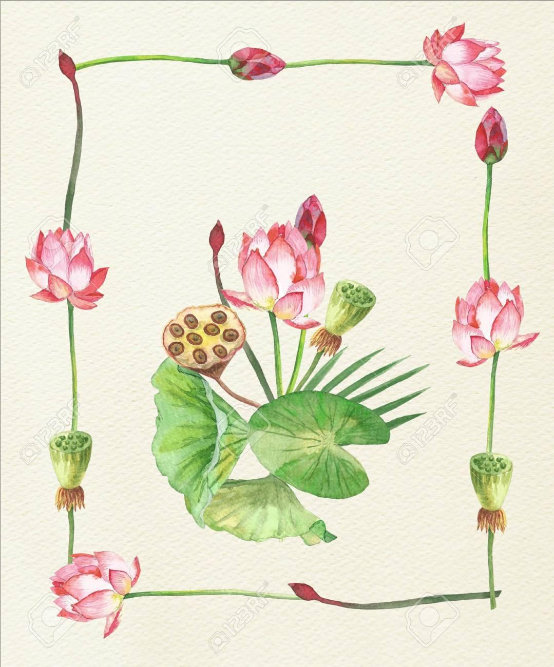 Lotus flowers hand painted watercolor illustration stock photo illustration lotus flowers hand painted watercolor illustration mightylinksfo